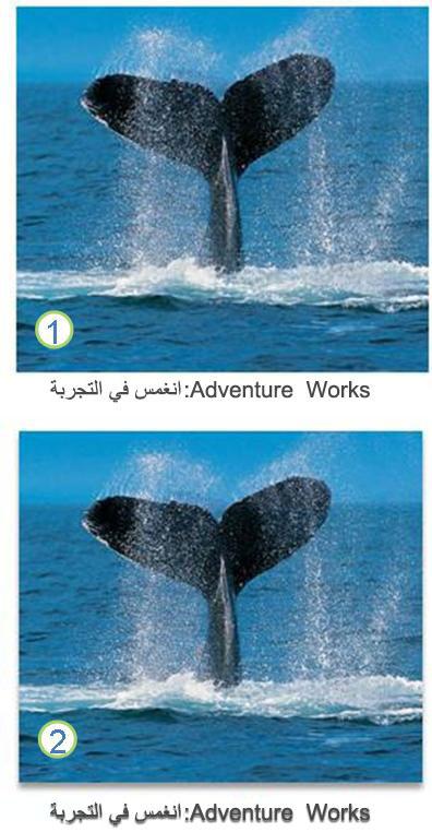 تأثيرات النص والصورة
