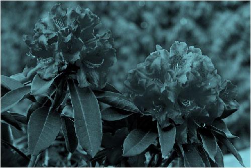 картина, преоцветена в синьозелено
