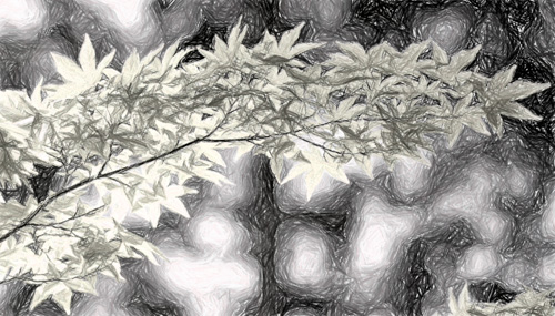 Obrázek s efektem