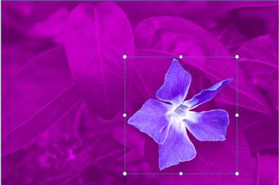 Květina s listy na pozadí