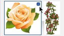 Wählen Sie die Miniaturansicht des Bildes aus, das Sie einfügen möchten. Oben links wird ein Häkchen eingeblendet.