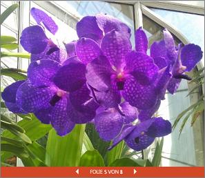 Eine eingebettete PowerPoint-Präsentation einer Blumenschau