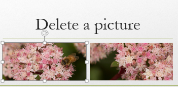 "When you select a picture, it becomes surrounded by ""handles."""