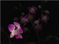 Custom animation effects: floating petals