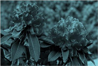 Imagen con un efecto de cambio de color a verde azulado