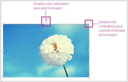 Imagen con controladores de tamaño resaltados