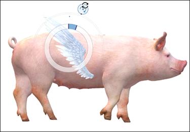 Aile attachée à un modèle de porc