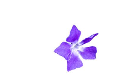הפרח לאחר הסרת הרקע