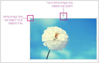 תמונה עם סימן של נקודות אחיזה לשינוי גודל