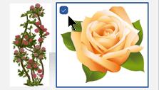 בחר את התמונה הממוזערת של התמונה שברצונך להוסיף. סימן אישור מופיע לידה.