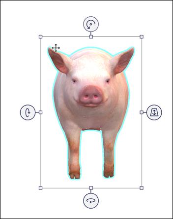 מודל חזיר שנבחר המציג חצים תנועה.