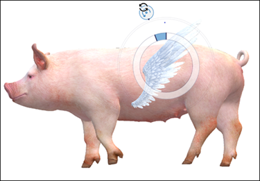 כנף מצורף למודל חזיר