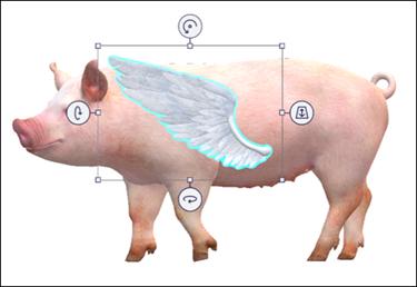 כנף חזיר ומודלי במסך.