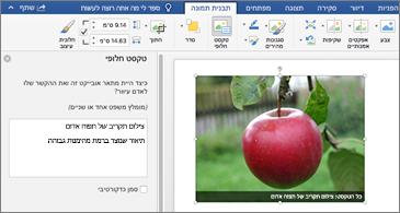 מסמך Word עם תמונה והחלונית 'טקסט חלופי' בצד שמאל