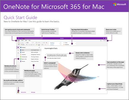 מדריך ההתחלה המהירה של OneNote 2016 for Mac