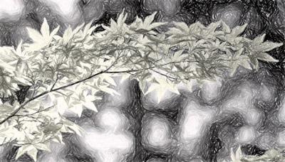 ग्रेस्केल प्रभाव के साथ चित्र