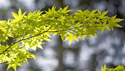 पत्तियों का चित्र