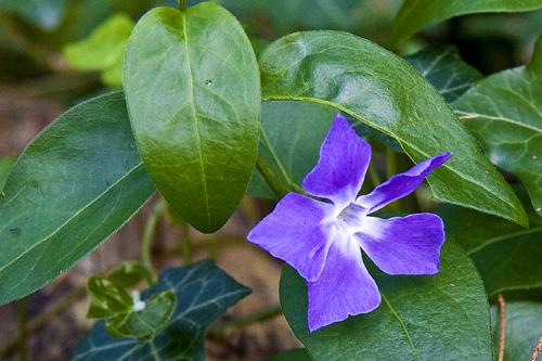 Virág a háttérben levelekkel
