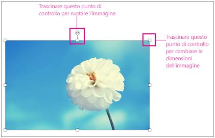 Immagine con i quadratini di ridimensionamento evidenziati