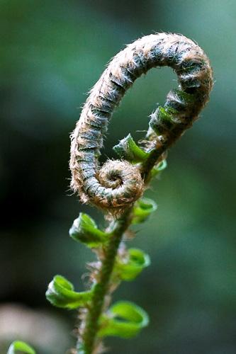 Immagine di una pianta con l'aggiunta di luminosità e contrasto