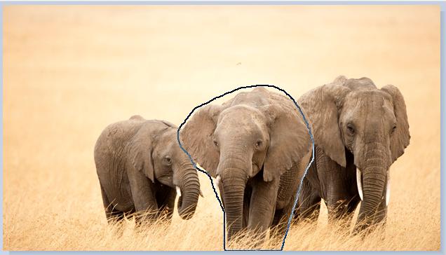 Immagine ritagliata: contorno a mano libera disegnato attorno a una parte dell'immagine.
