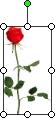 Immagine di una rosa con il punto di manipolazione di rotazione verde