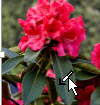 투명한 색 설정을 클릭한 후에 나타나는 포인터가 있는 그림