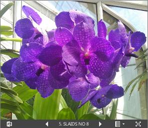 iegulta powerpoint prezentācija par ziedu izstādi