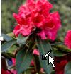 Bilde med markør som vises etter klikking på Angi gjennomsiktig farge