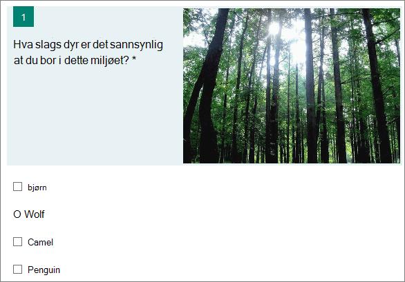 Bilde av en skog vises ved siden av et spørsmål