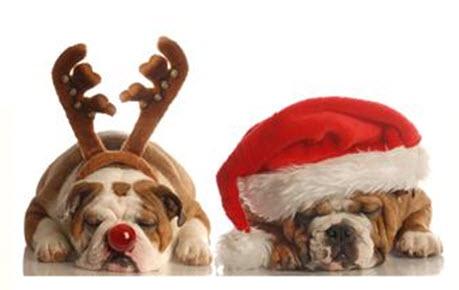 ClipArt: Honden in kerstkostuum