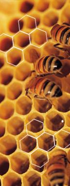 Bijen op een honingraat