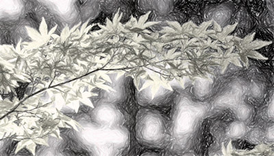Imagem com efeito de escala de cinza