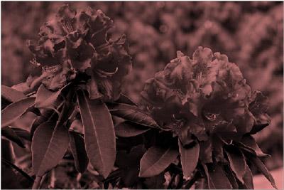 Imagem com efeito de recoloração vermelha