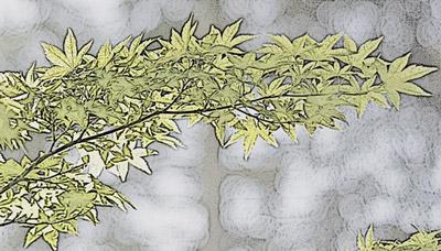 Folhas com o efeito Fotocópia