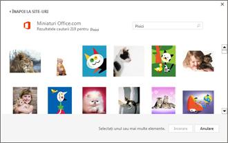 Exemple de imagini cu pisici pe site-ul Miniaturi