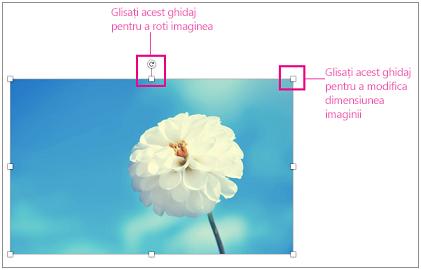 Imagine cu ghidajele de redimensionare evidențiate