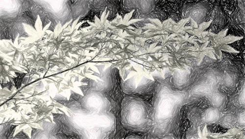 Slika z učinkom Sivine