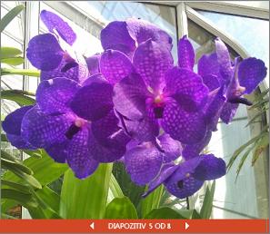Vdelana PowerPointova predstavitev razstave cvetja