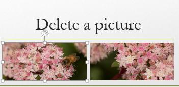 """När du markerar en bild omges den av """"handtag""""."""