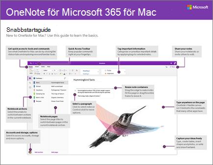Snabbstartsguide för OneNote 2016 för Mac