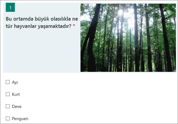 Bir soru yanında görüntülenen orman görüntüsü