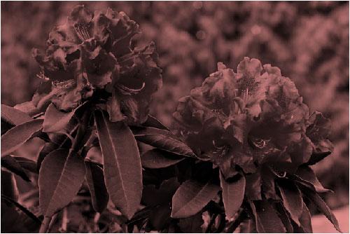 Kırmızı yeniden renklendirme efektli resim
