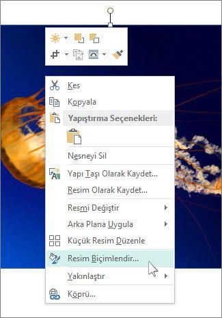 Publisher'daki Resmi Biçimlendir seçeneklerinin ekran görüntüsü.