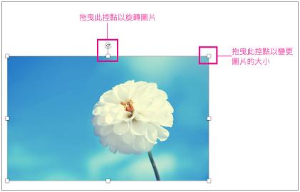 含有醒目提示調整大小控點的影像