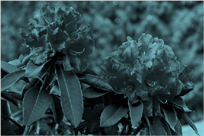 使用藍綠重新著色效果的圖片